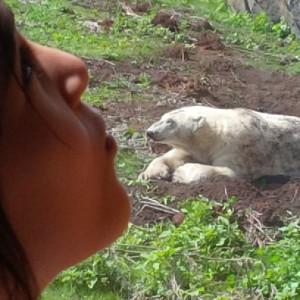 bears at assiniboine park zoo