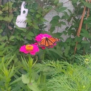 assiniboine zoo butterfly